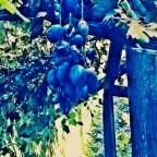 Farm to table in Miglionico, Italy: Il Ritrovo del Cima Ristorante [classic article]