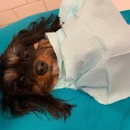 The Tooth Fairy for pets in the Baltimore/DC area: Pearly White Pets