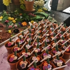 Terrific bites and sips at Ritz Carlton's Aqimero during the Philadelphia Flower Show
